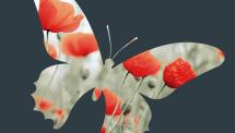 Recensement des papillonstest