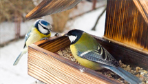 Protection des oiseaux LRBPO